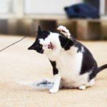 la vaccination chez le chat