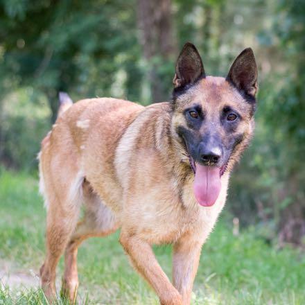 Arkan, chien à l'adoption