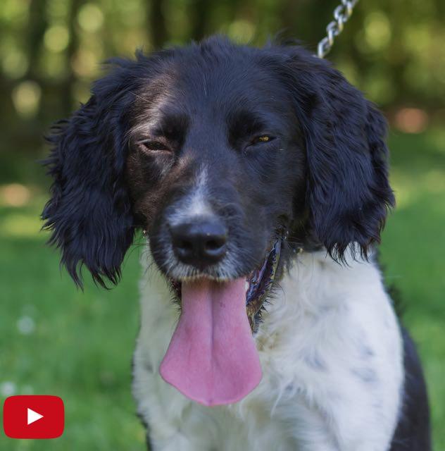 adoption chien SPA