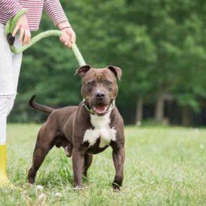 Tyson (2)